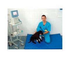 URGENT medici veterinari Anglia