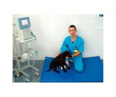 Medici veterinari UK
